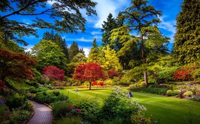 Picture trees, flowers, garden