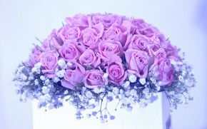 Picture flowers, box, roses, bouquet, pink, light background, lilac