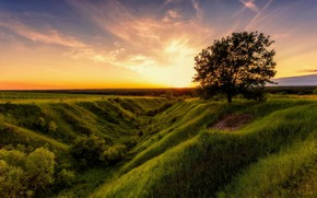Wallpaper Alexey Malygin, the sky, dawn, summer, nature, field, tree