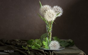Picture leaves, bouquet, salsify