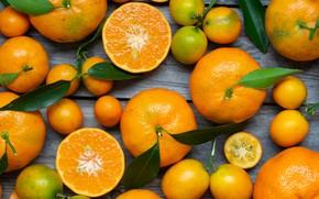 Picture leaves, citrus, citrus, Mandarin, tangerines