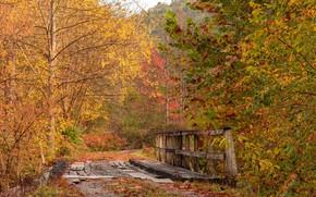 Picture road, autumn, bridge