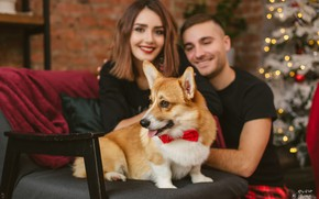 Picture girl, mood, dog, chair, New year, tree, guy, Welsh Corgi, Juliana Mizinova