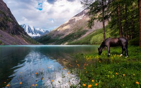 Wallpaper forest, the sky, clouds, landscape, flowers, mountains, nature, lake, reflection, horse, horse, pine, Russia, drink, ...