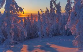 Picture winter, snow, trees, landscape, sunset, nature, ate, shadows, Yakutia, Vladimir Ryabkov