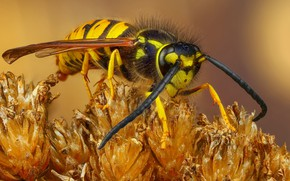Picture mustache, macro, background, plant, insect, striped, seresini