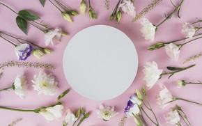 Picture flowers, white, white, pink background, chrysanthemum, flowers, beautiful, romantic, eustoma, eustoma
