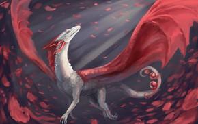 Picture dragon, petals, cruise