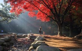 Picture autumn, light, trees, landscape, nature, Park, stones, girl, dog, child, South Korea