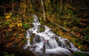 Picture autumn, forest, stream, cascade
