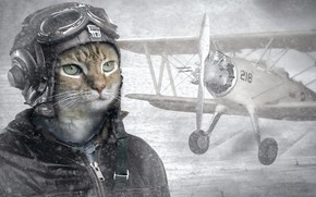 Picture cat, helmet, pilot, the plane, pilot