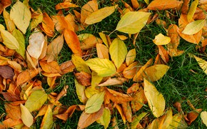 Picture autumn, grass, leaves, background, yellow, colorful, lawn, yellow, background, autumn, leaves, autumn