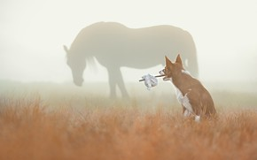 Picture field, autumn, grass, look, nature, fog, horse, horse, dog, morning, silhouette, pasture, red, traveler, stick, …