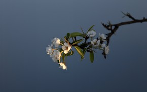 Picture branch, spring, flowers