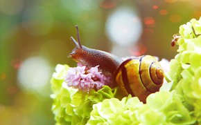 Picture summer, macro, flowers, background, snail, petals, sink, green, bokeh, in colors