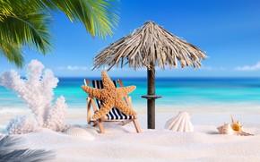 Picture sand, sea, beach, summer, star, vacation, shell, summer, beach, sand, vacation, palms, tropical, starfish, seashells