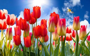 Picture the sky, bird, tulips