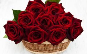 Picture roses, red, basket, Olena Rudo