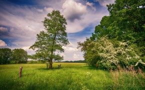 Wallpaper grass, trees, meadow