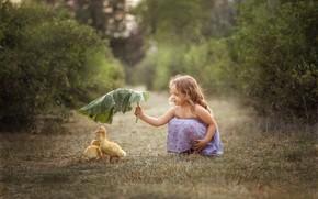 Picture sheet, rain, girl, Chicks, the goslings, lapuh