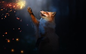 Picture fire, butterfly, Fox, by 0l-Fox-l0