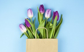 Picture flowers, purple, tulips, flowers, beautiful, blue background, tulips, spring, purple