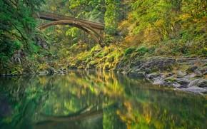 Picture forest, bridge, river, Lewis River, Washington State, Washington, River Lewis, Мост Моултон-Фолс, Moulton Falls Bridge