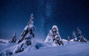 Picture winter, snow, trees, night, nature, stars, ate, Norway