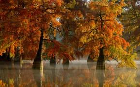 Picture autumn, trees, nature, lake, couples, haze, mangroves