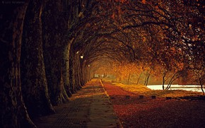 Picture autumn day, the road into the distance, alley in the Park, Luis Valadares