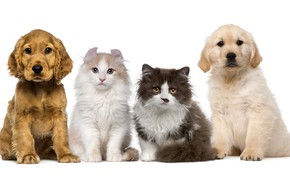 Picture dogs, cats, puppies, four, kittens, white background