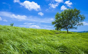 Picture greens, field, summer, the sky, grass, clouds, blue, tree, slope, meadow
