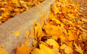 Wallpaper autumn, leaves, background, yellow, colorful, maple, yellow, background, autumn, leaves, autumn, maple