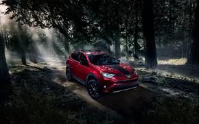 Picture forest, transport, car, boulders, Toyota RAV 4