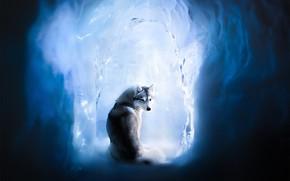 Picture ice, dog, Husky, ice cave