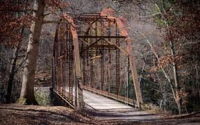 Picture forest, bridge, nature