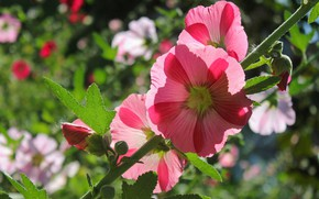 Picture macro, branch, mallow
