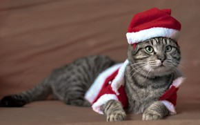 Picture cat, cat, look, pose, background, holiday, Christmas, costume, New year, lies, image, face, brown background, …