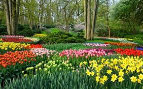 Picture Park, garden, tulips, Netherlands