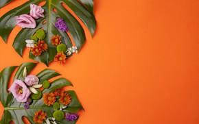 Wallpaper leaves, flowers, chrysanthemum, eustoma