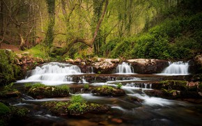 Picture greens, forest, summer, leaves, trees, branches, nature, Park, stones, thickets, trunks, shore, vegetation, for, waterfall, …
