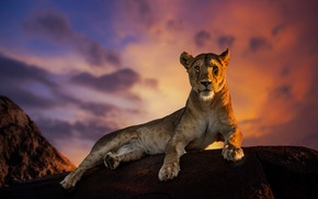 Picture the sky, stone, lioness, sky, stone, lioness, Jie Fischer