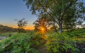 Picture summer, the sky, the sun, rays, light, trees, sunset, branches, tree, thickets, glade, fern