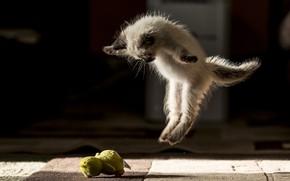 Picture cat, jump, ballet