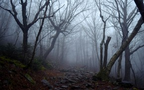 Picture forest, trees, nature, fog, stones, path