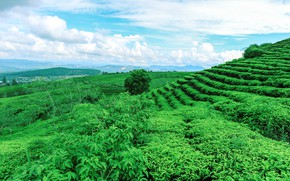 Picture Greens, Vegetation, Hill