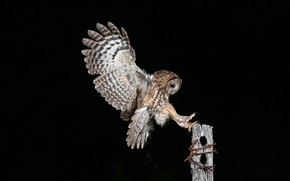 Picture owl, bird, wings, post, feathers, claws, black background, barbed wire