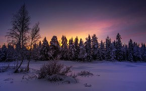 Picture winter, forest, night