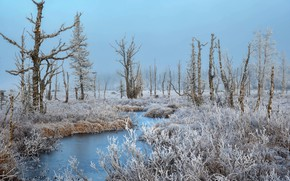 Picture winter, frost, trees, river