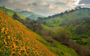 Picture flowers, mountains, slope